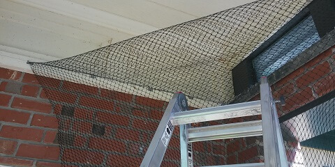 bird-netting-service-image